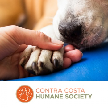 A Helping Paw to Local Animals in Need