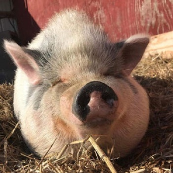 Run to Exile 5K for Charity - Iowa Farm Sanctuary