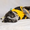 animalhouserescueco's profile image - click for profile