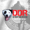 detroitdogrescue's profile image - click for profile